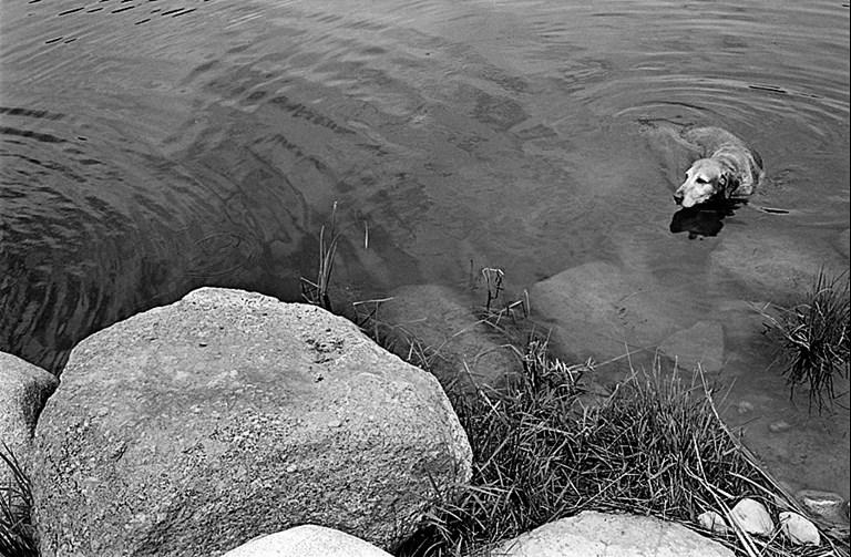 Ike Takes a Dip - 2008
