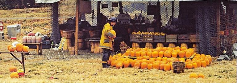 Joel Sternfeld Pumpkin Detail