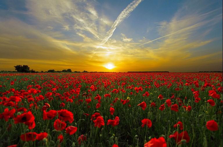 Sunset over Poppys
