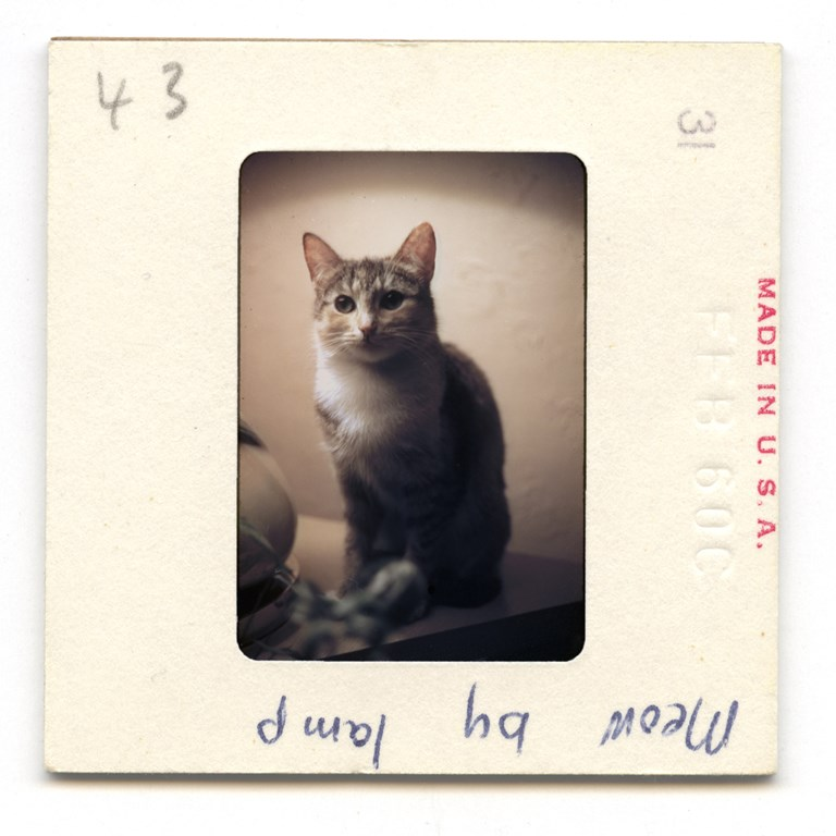 Meow By Lamp - 1960
