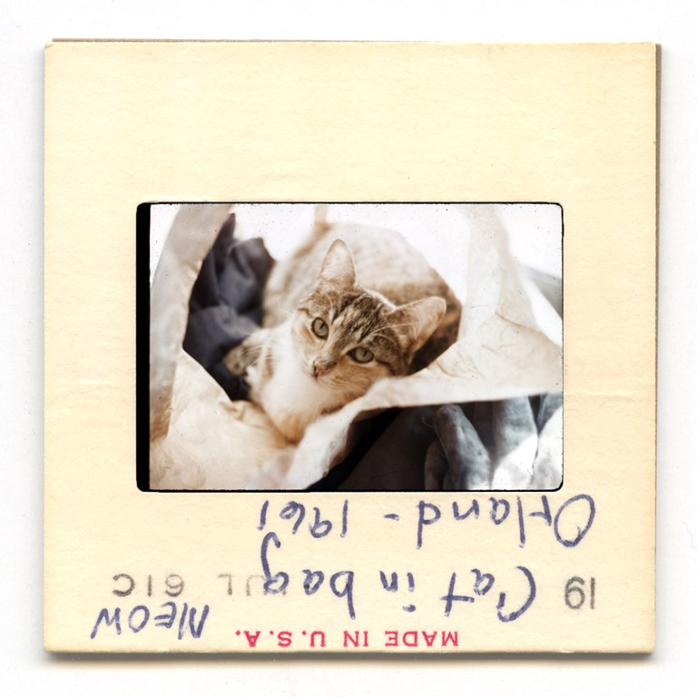 Meow In Bag, Orland - 1961