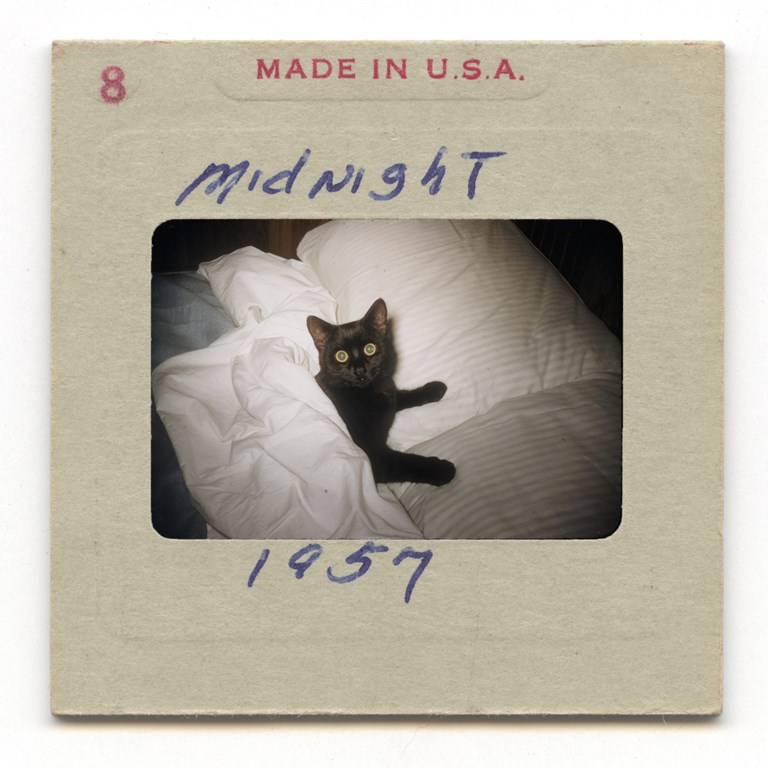 Midnight. Black cat in a bed. 1957