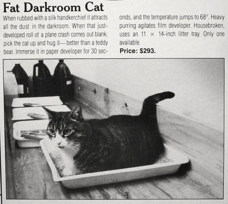 Fat Darkroom Cat