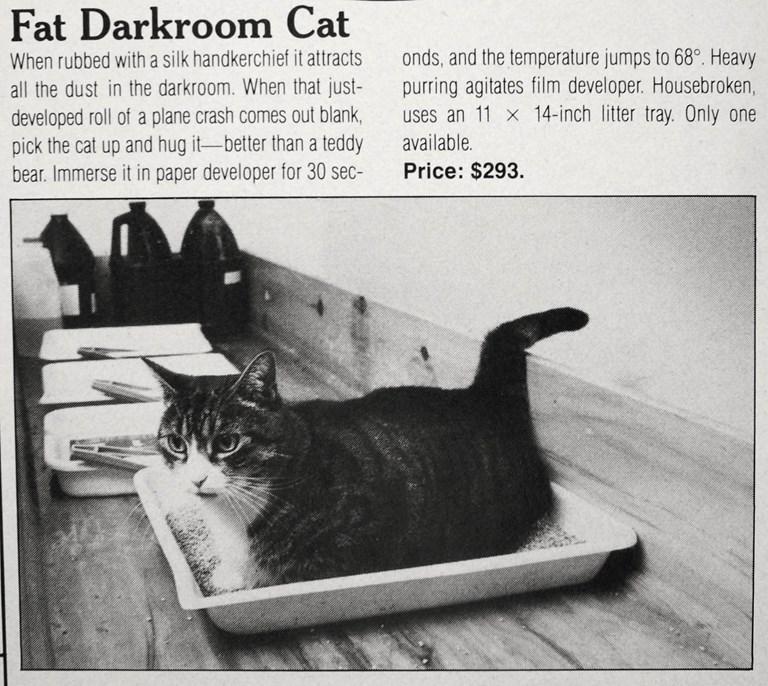 Fat Darkroom Cat