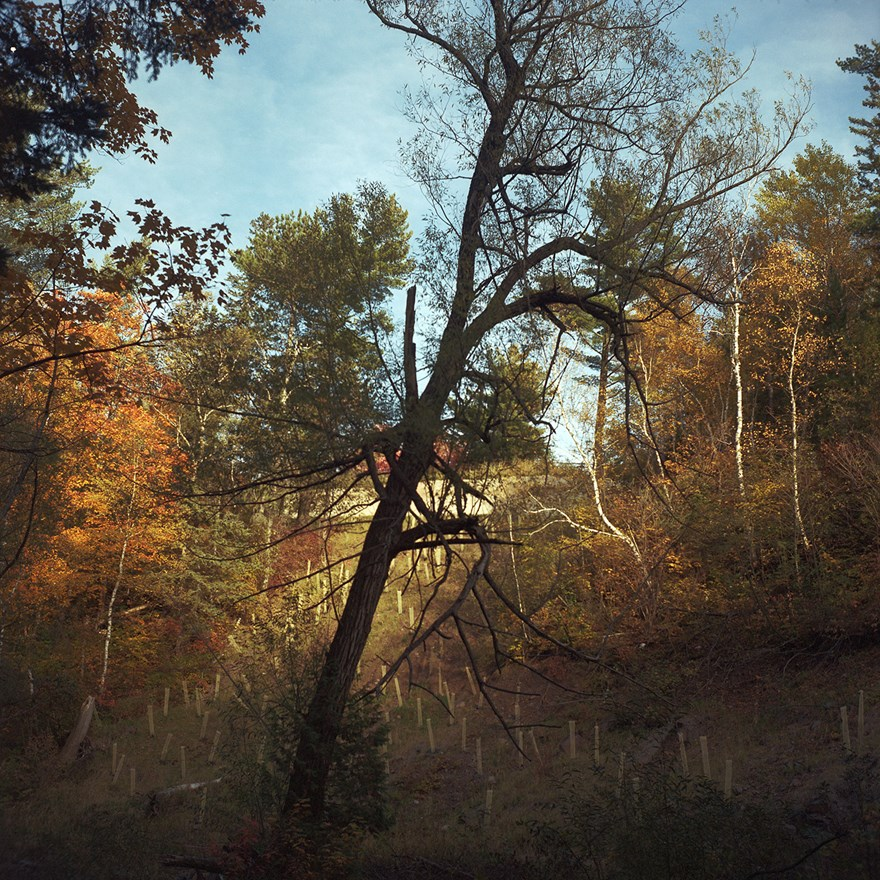 Tree At Chester Creek, Duluth, Minnesota, October 2015