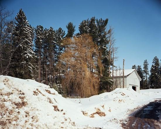 Tree, Skandia, Michigan, March, 2014