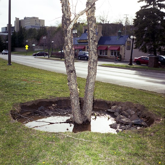 Tree With A Giant Hole Around It, Duluth, Minnesota, May, 2010