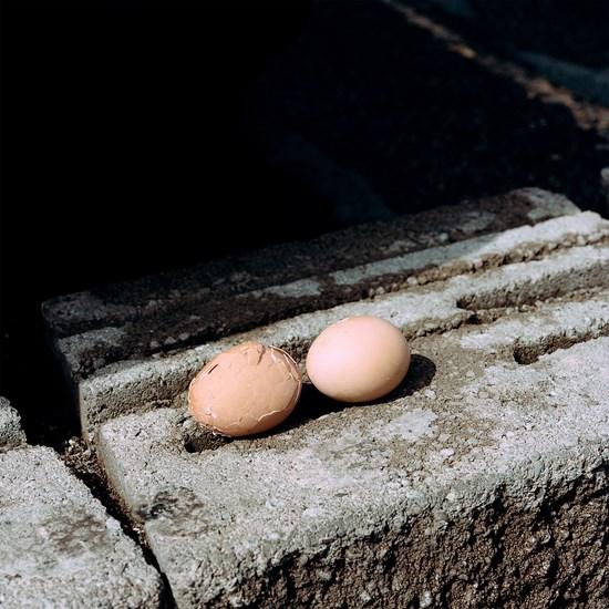 Found Eggs, Duluth, Minnesota, June 2018