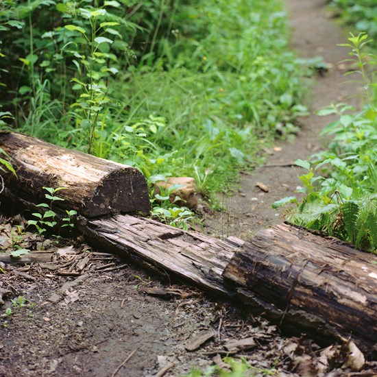 Footpath Cut Through a Log, Duluth, Minnesota, July 2020