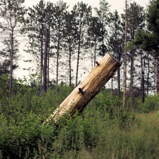 Stump, Duluth, Minnesota, July 2020