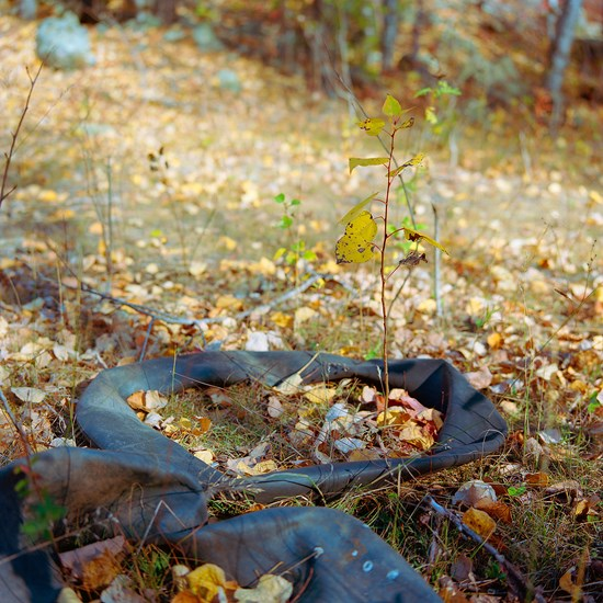 Inner Tubes With Plant, Duluth, Minnesota, October 2020