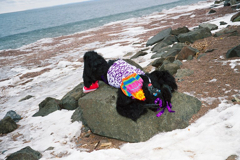 Ape: Polar Plunge 2011